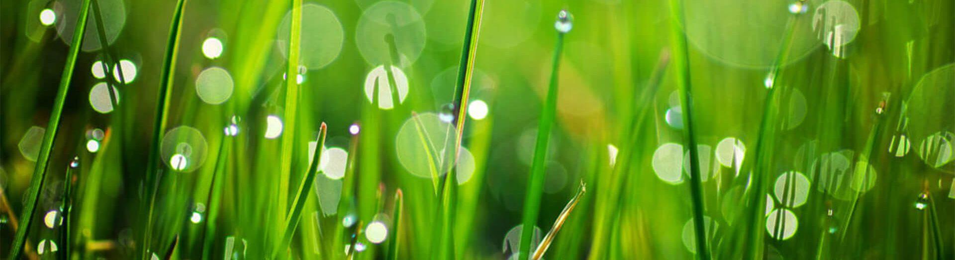 banner-grass-1-e1578365642517